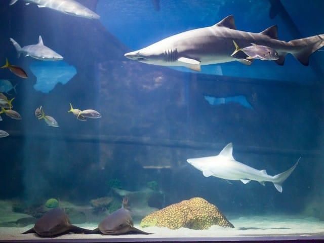 Captain's Blog - Greater Cleveland Aquarium