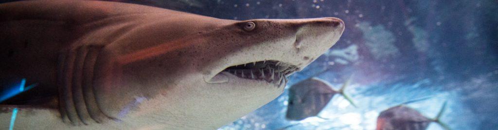 Shark Gallery Header