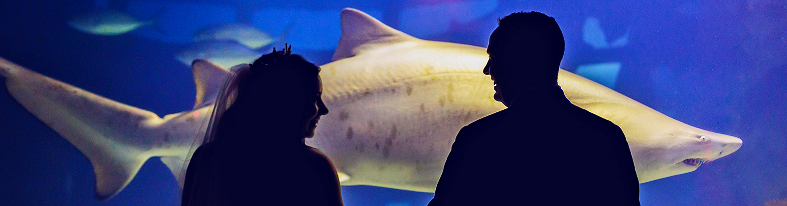 Couple in front of shark