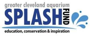 Splash Fund