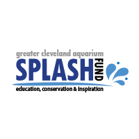 Splash-Fund